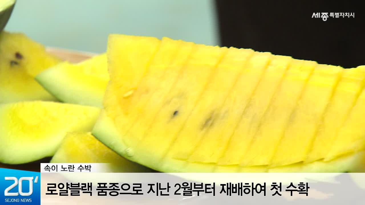 <20초뉴스> 세종시 노란수박을 아시나요?