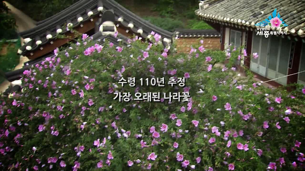 제6화 희노애락 담은 나라꽃 무궁화