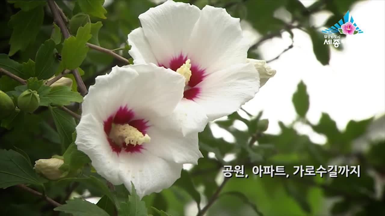 제21화 무궁화 메카 세종시