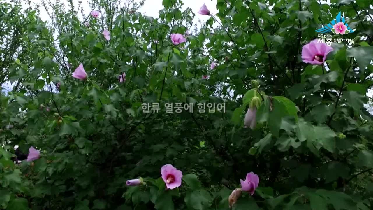 제24화 중국에 핀 나라꽃, 한중 교류의 매개체