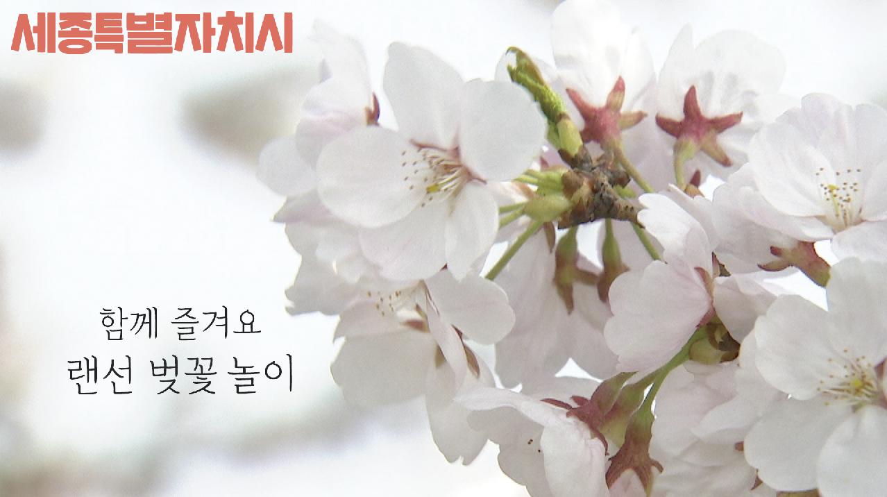 랜선 벚꽃 놀이