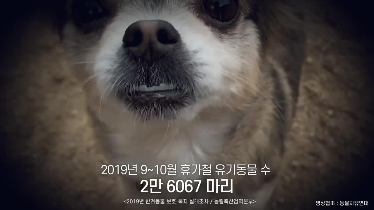 유실유기동물예방캠페인