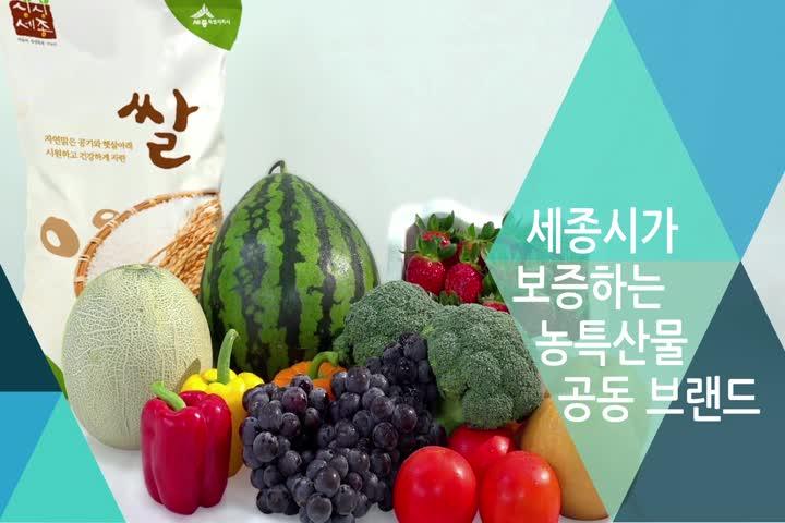 싱싱세종브랜드홍보영상